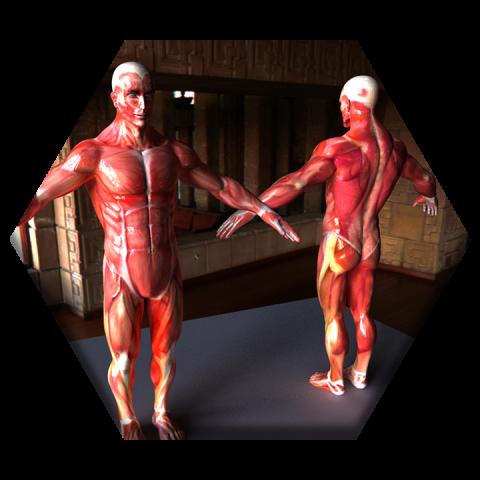 anatomiaExa